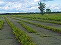 Shawangunk Grasslands NWR runways.jpg