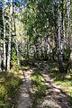 Shilovsky District, Ryazan Oblast, Russia - panoramio (12).jpg
