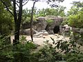 Sichuan takin cin zoo.jpg