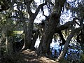 Skidaway Island SP - Big Ferry Trail - panoramio (2).jpg