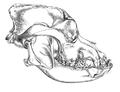 Skull of bulldog - Keulemans.png