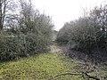 Slowly encroaching - geograph.org.uk - 1749882.jpg