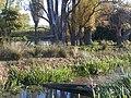 Small Pond at Luddenham Court Farm - geograph.org.uk - 1015038.jpg