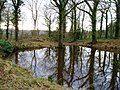 Small woodland pond in Cockshoot Wood - geograph.org.uk - 528267.jpg
