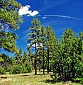 Smell the Air, Oak Creek Canyon, AZ 7-13 (14659819948).jpg