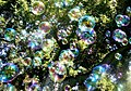 Soap bubbles-jurvetson.jpg