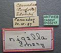 Solenopsis nigella casent0103217 label 1.jpg