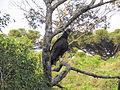 Some bird idk.jpg