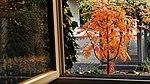 Sorbus Herbstlaub 04.jpg