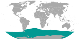 Southern Elephant Seal area.png