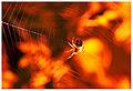 Spider (7309675968).jpg