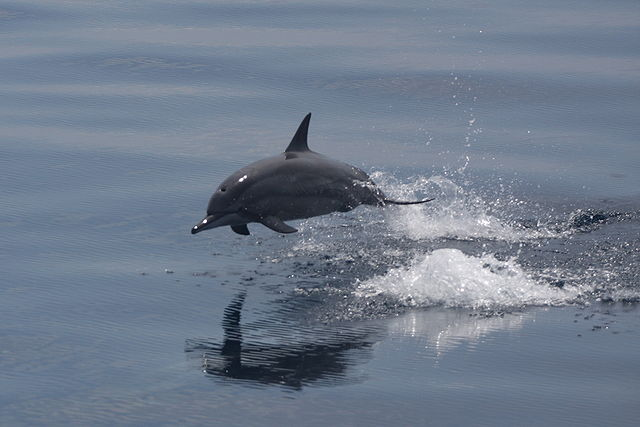best dolphin pic, spinner dolphin, #dolphin