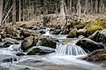 Spring River (32116539).jpeg