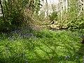 Spring flowers in woodland, Winchelsea. - geograph.org.uk - 787722.jpg