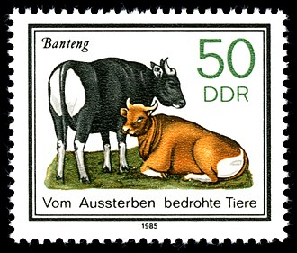 Banteng - Stamp with bantengs from the GDR