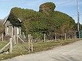Station Masters old house Tonfanau - geograph.org.uk - 332232.jpg