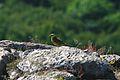 Stenshuvud bird.jpg
