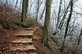 Stepped Path in Hinkley Wood - geograph.org.uk - 1112626.jpg