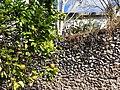 Still Life with Orange Tree and Stone Wall - Izamal - Merida - Mexico.jpg