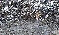 Stoney-Baynard Plantation, Hilton Head, S.C. Detail of Tabby Cement, October 2020.jpg