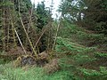 Storm damage, Long Knowe - geograph.org.uk - 568009.jpg