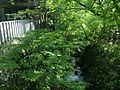 Stream in front of Nanzoin Temple in Sasaguri, Kasuya, Fukuoka (south).JPG