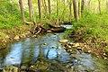Streamside Hike (1) (14032121908).jpg