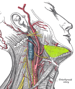 Submandibular space (gray507 edit).png