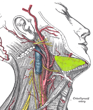 Submandibular space - Right submandibular space situated on the superficial surface of mylohyoid muscle, between the anterior and posterior bellies of the digastric muscle (highlighted in green).