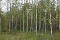 Suedliche Froettmaninger Heide Herbst Muenchen-45.jpg