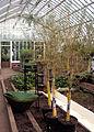 Sunken Garden, Phipps Conservatory, 2015-10-13, 02.jpg