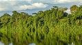 Suriname River (32694060174).jpg