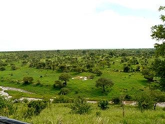 Tarangire National Park - Image: Tarangine (62)