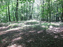 Tarlton Cross Mound from the west.jpg