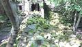 Temple de Beng Meala - Angkor 25.png