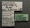 Tetramorium steinheili casent0102393 label 1.jpg