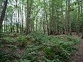 Teufelsbruch swamp at the Bäckerfurt in summer 5.jpg