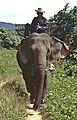 ThaiKoChang04.jpg