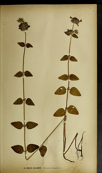 File:The British farmer's plant portfolio - specimens of the principal British grasses, forage plants and weeds - with full descriptions (1896) (14780102045).jpg
