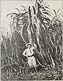 The Cuba review (1907-1931) (20778127026).jpg