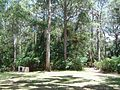 The Knoll picnic area Tamborine Mountain.JPG
