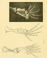 The Osteology of the Reptiles-202 kjhg rty ert.png