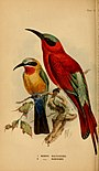 The birds of South Africa (1875) (19762345354).jpg