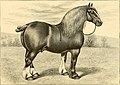 The breeds of live stock, and the principles of heredity (1887) (14781139805).jpg
