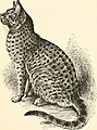 The cat, a guide to the classification and varieties of cats and a short tratise upon their care, diseases, and treatment (1895) (14761321841).jpg