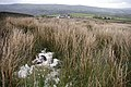 The sheep went on being dead - geograph.org.uk - 430826.jpg
