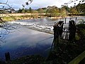 The weir at Stair - geograph.org.uk - 1038209.jpg