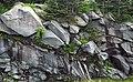 Thunderhead Sandstone (Neoproterozoic; Clingmans Dome, Great Smoky Mountains, North Carolina, USA) 19 (36207028593).jpg