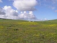 Tienie Versfeld Wildflower Reserve-P9210008.jpg