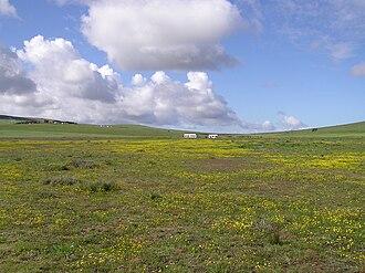 Darling, Western Cape - Image: Tienie Versfeld Wildflower Reserve P9210008